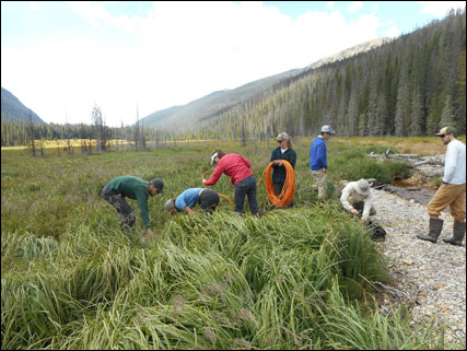 Students lay out cables for an electrical resistivity survey within a wetland along the Colorado River in Rocky Mountain National Park.