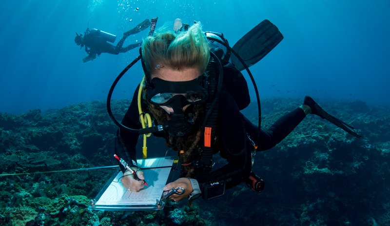 A diver records data as part of a marine life census on the Great Barrier Reef in Australia.