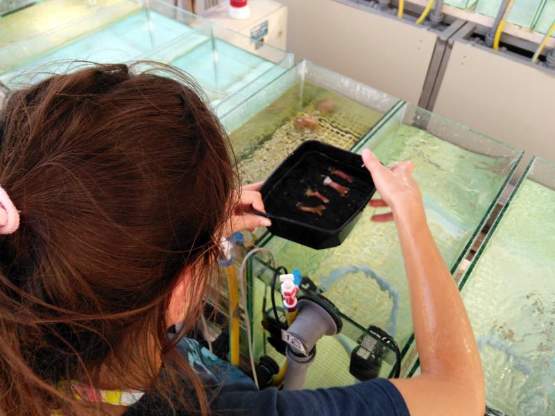 Ph.D. student Ana Martinez-Fernandez checks on her coral experiment.