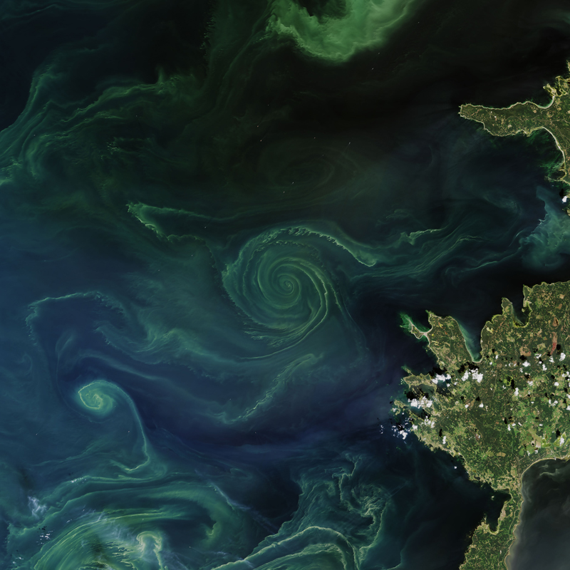 Phytoplankton blooms in the Gulf of Finland