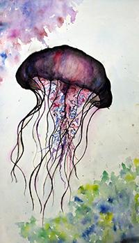 Lion's Mane Jellyfish. Credit: Lili Barba