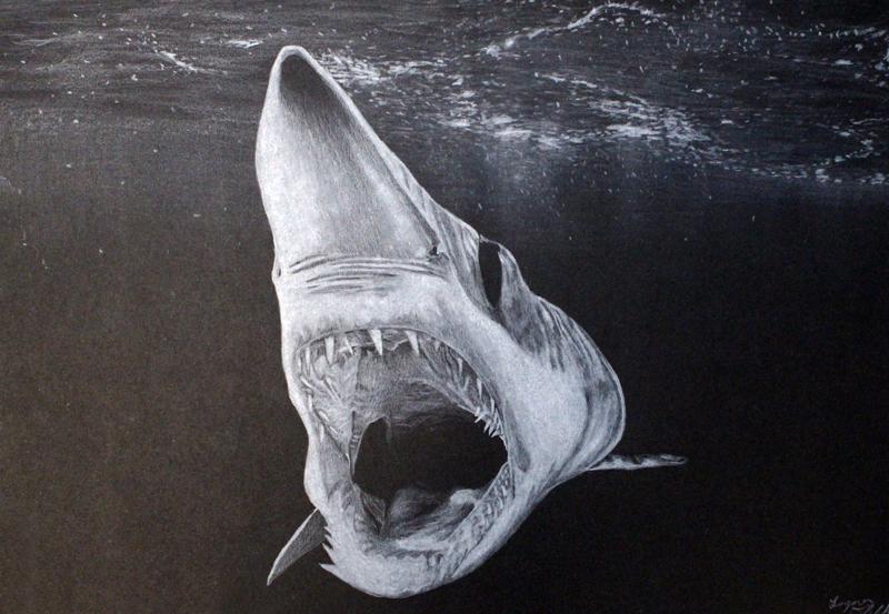Mako Shark. Credit: Logan Dibble