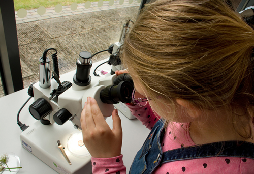 A 7-year-old girl examines a slide using a research microscope at a Science Hunters public event.
