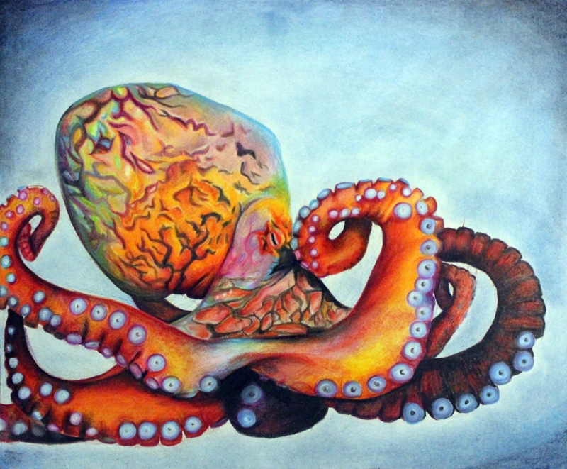 Octopus. Credit: Xindi Chang