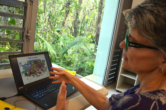 Uriarte examines data collected remotely by airplane over Puerto Rico's tropical forests.
