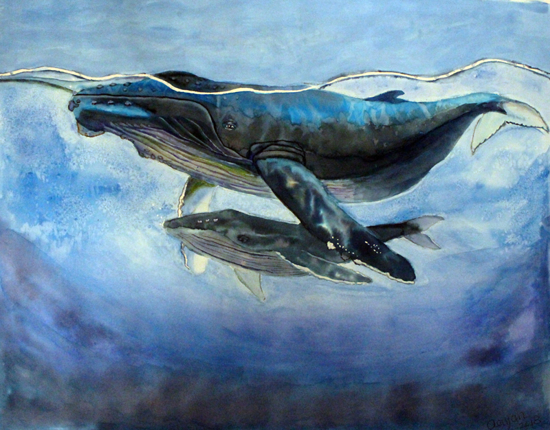 Humpback Whales. Credit: Aayan Patel