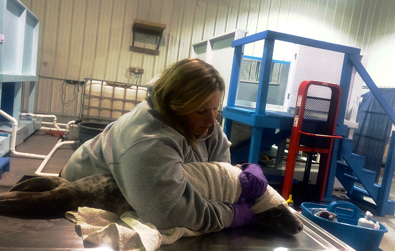 Lynda Doughty of the group Marine Mammals of Maine holds a seal pup she treated last April.