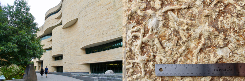 The limestone façade of D. C.'s National Museum of the American Indian (left). A close-up of fossiliferous worm burrows (right).