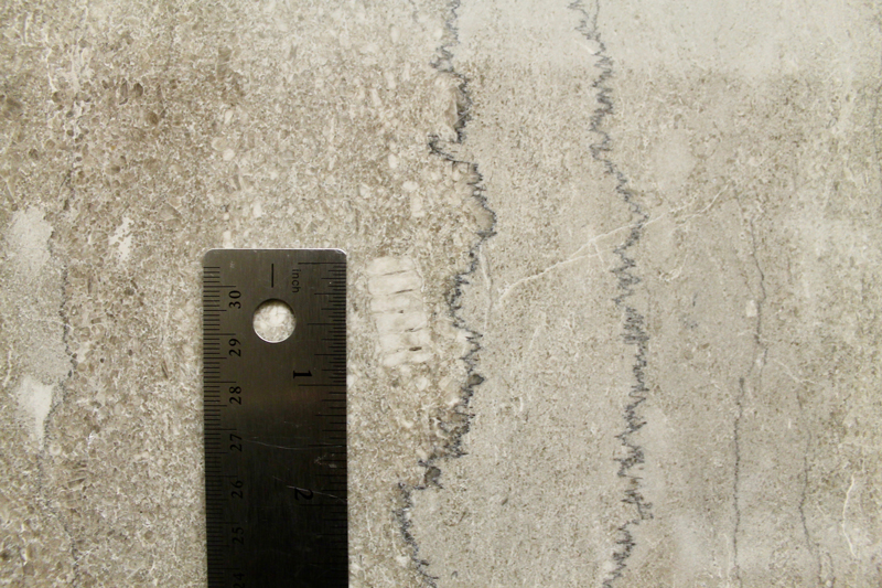 A close-up of a crinoid joint in gray limestone in the Rayburn House Office Building (ruler for scale).