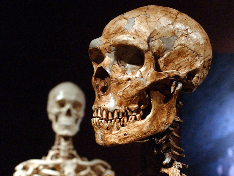 Neanderthals Likely Ate Rotten Meat
