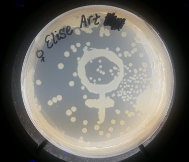 Queer Science Day participants create designer agar plates with bacterial DNA.