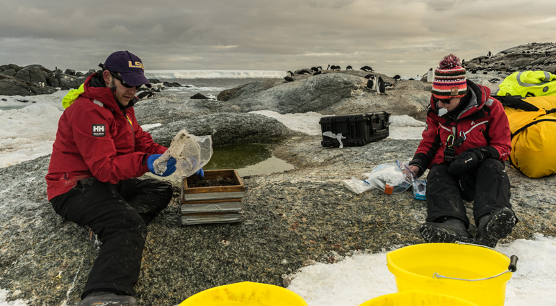 Scientists sieve excavated penguin guano to obtain small samples to test DNA.