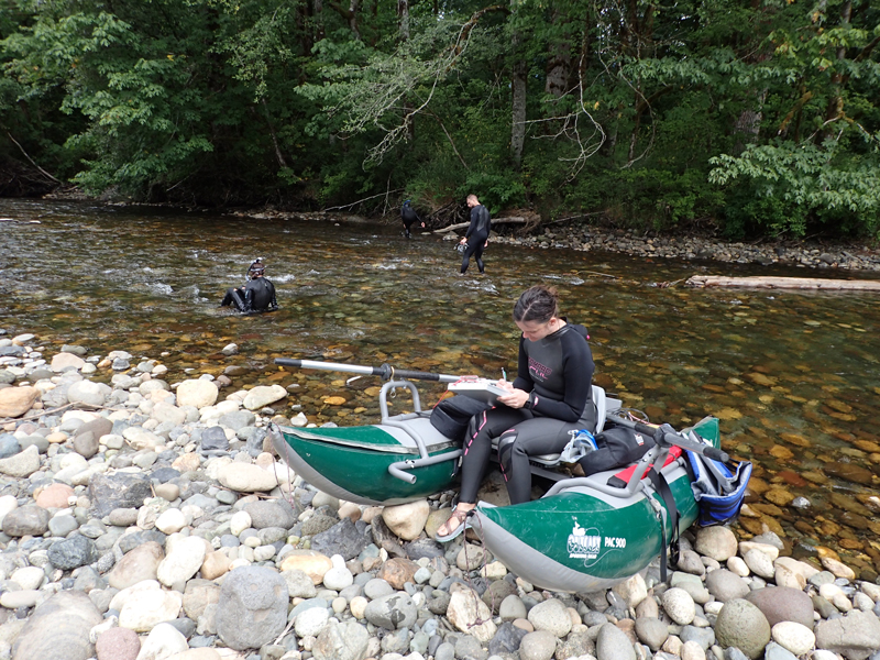 Stillaguamish, counting fish and measuring temperature and dissolved oxygen