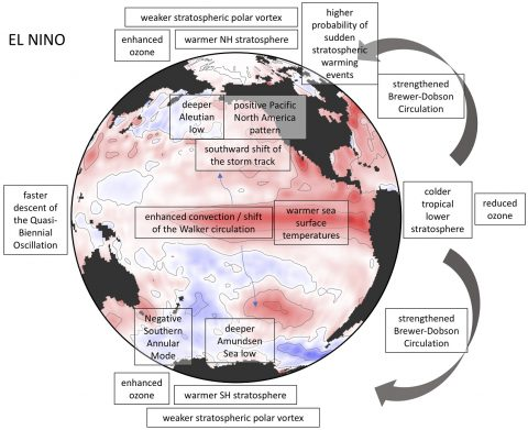 El Nino impacts in the troposphere and stratosphere