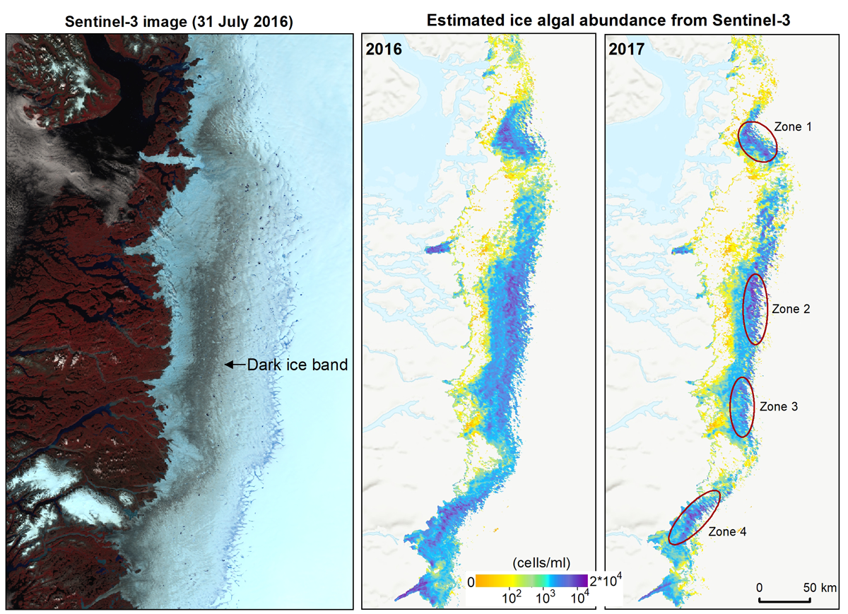 Algal blooms as seen from and Earth orbiting satellite