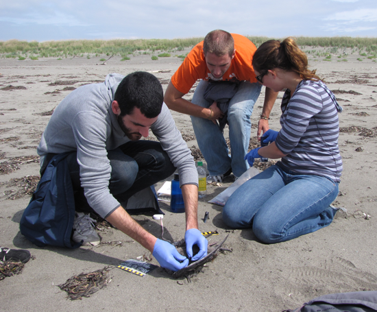 Measuring, photographing, and recording data for species-identification