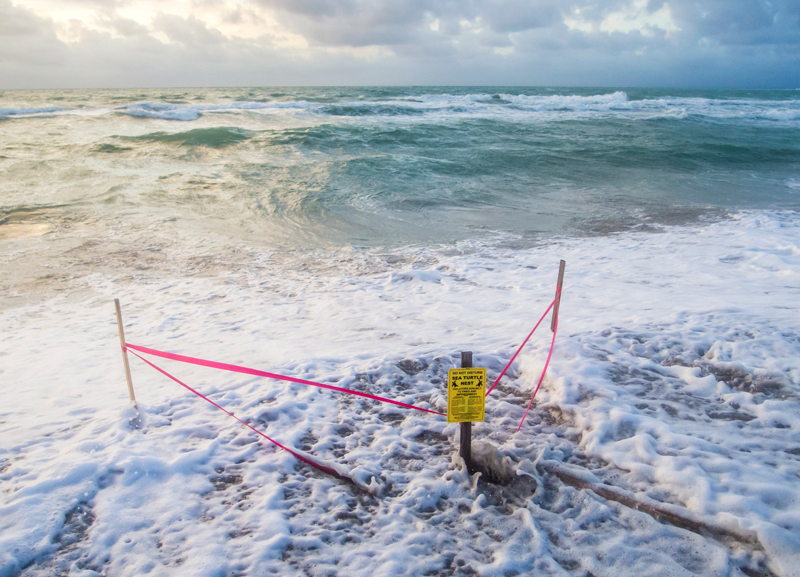 """Ocean waves wash over a cordoned-off triangle marked as a """"sea turtle nest."""""""
