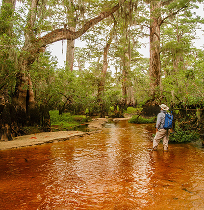Photo of a man knee-deep in a muddy river lined by cypress trees