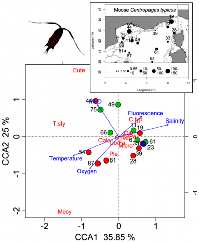 Abundance distribution of the copepod plankton species <em>Centropages typicus</em> during MOOSE_GE 2014.