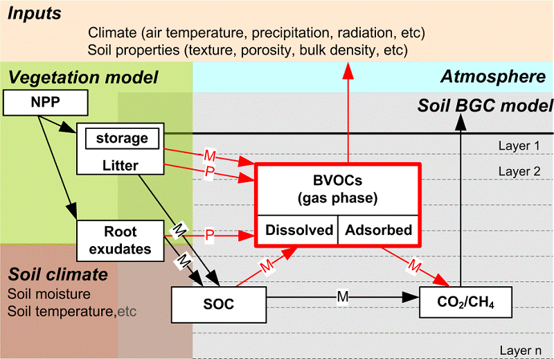 Schematic drawing of the soil BVOC model