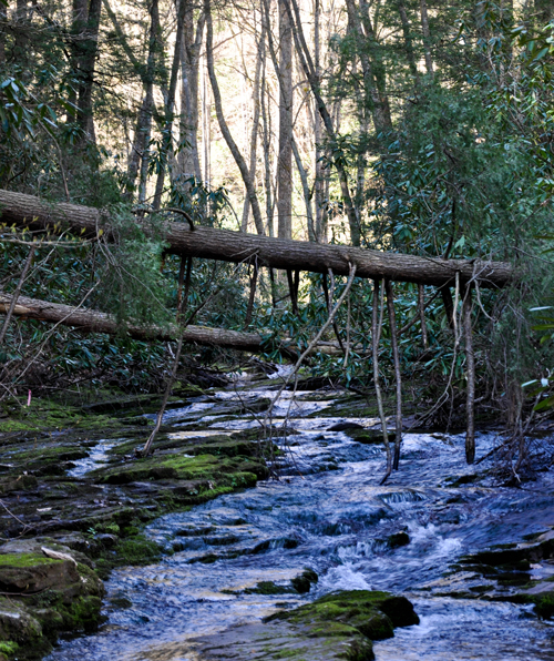 A creek runs through a thick forest.