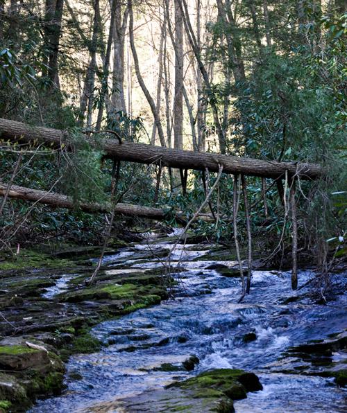 A creek runs through a thick forest.