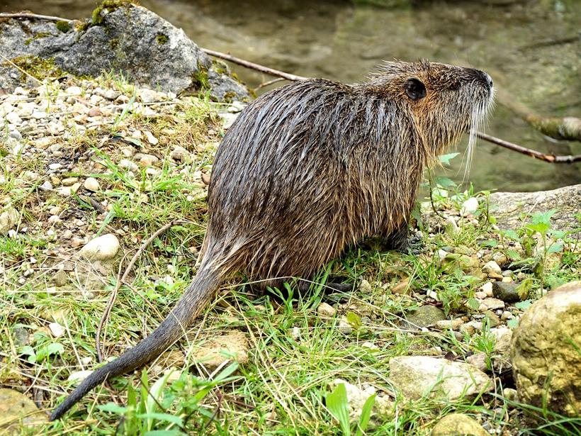 Invasive Species Drive Erosion in Aquatic Environments - Eos