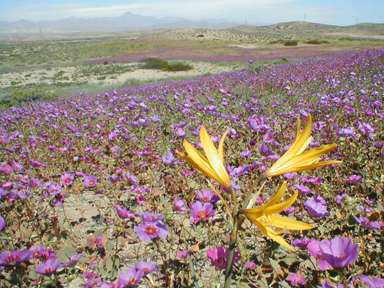 Flowers in a desert