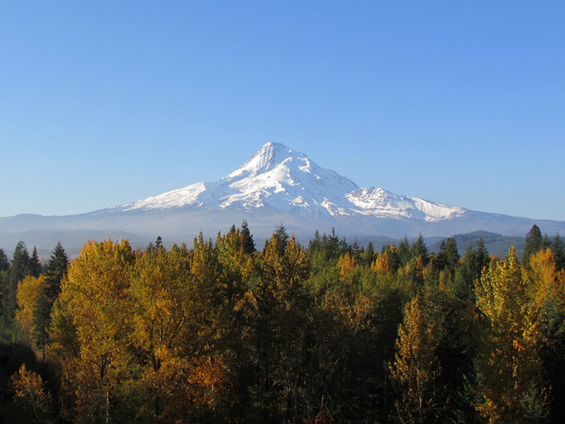 Fall foliage foregrounds gorgeous, glaciered Mount Hood