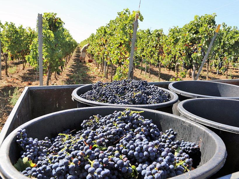 600 Years of Grape Harvests Document 20th Century Climate Change - Eos