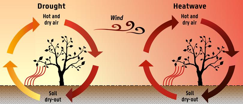 Circular diagrams of drought and heat wave cycles