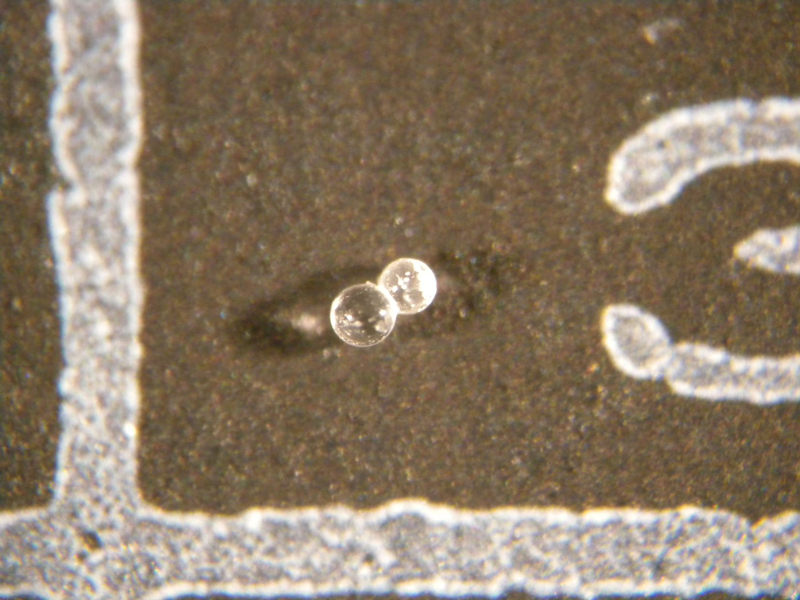 Two microtektites mounted on a brown micropaleontology slide