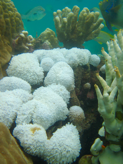 Tropical coral reef ecosystem with bleached coral