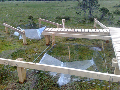 A wooden bog bridge extending out to two peatland study plots in France