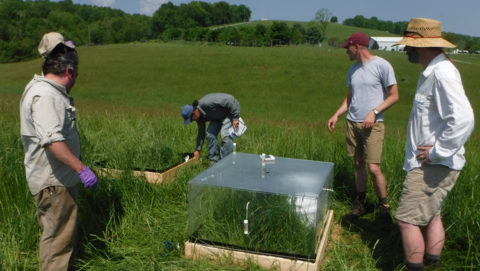 Four scientists gather around a plexiglass chamber within a green, grassy pasture.
