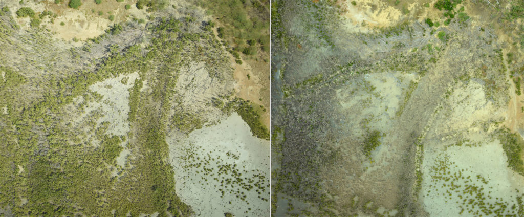 Aerial photos of the Jobos Bay mangrove forest before and after Hurricane Maria