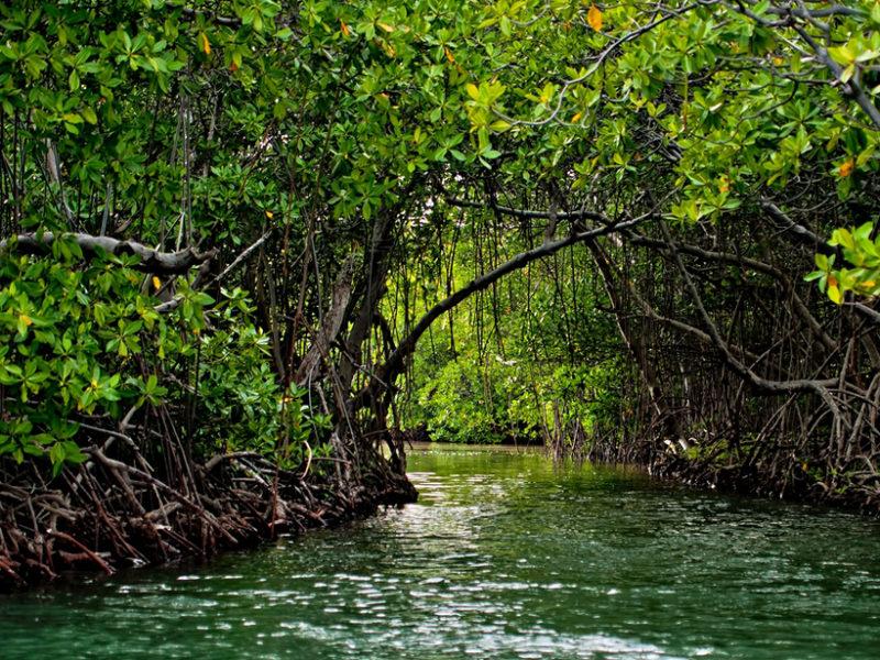 puerto-rico-mangroves-800x600