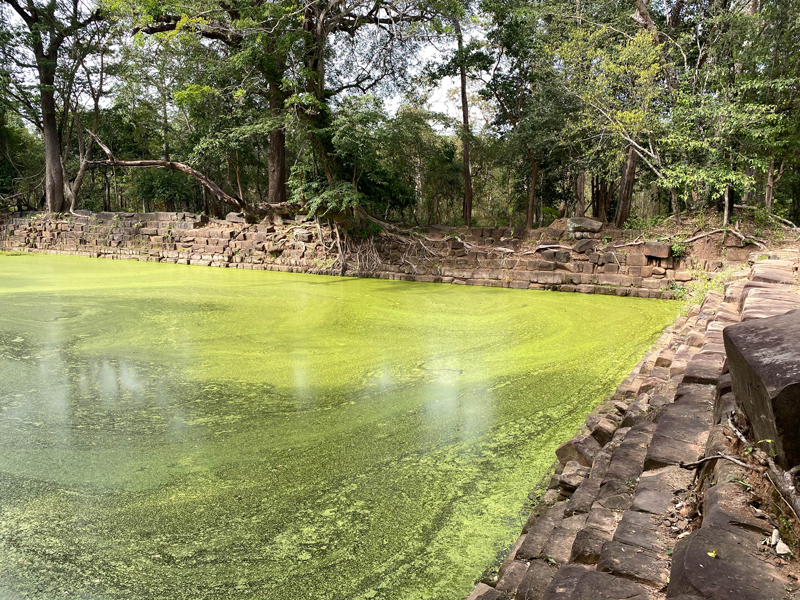 Stone reservoir in the middle of a jungle, filled with algae-covered water