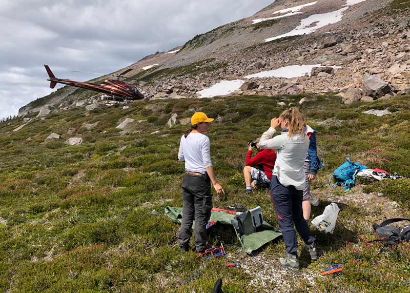 Researchers stand in a grassy mountainside area with their equipment.