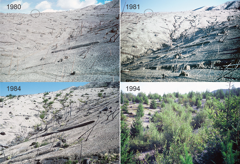 Image sequence showing geomorphic and vegetation change at a site in upper Smith Creek valley from 1980 to 1994