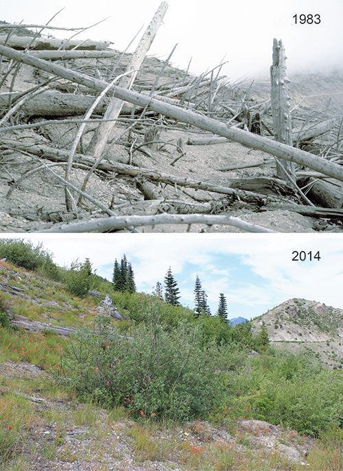 Pair of photographs showing growth of plant communities between 1983 and 2014 at a site along upper Smith Creek