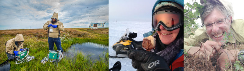 Series of scenes showing NGEE Arctic researchers at different field sites