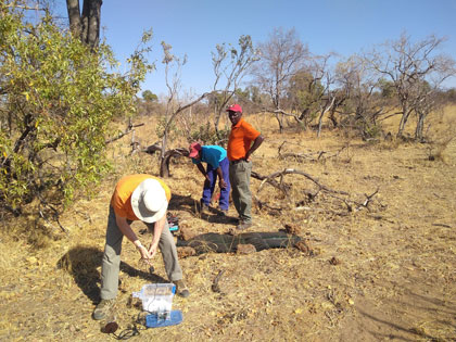 Scientists deploy seismic monitors beneath the ground in the South African savanna