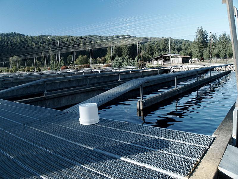 Metal and concrete salmon pools at Oregon's McKenzie River Hatchery