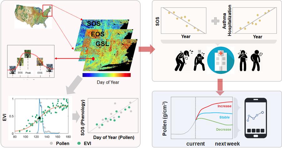 Diagram illustrating a conceptual framework for integrating pollen data into allergy risk management