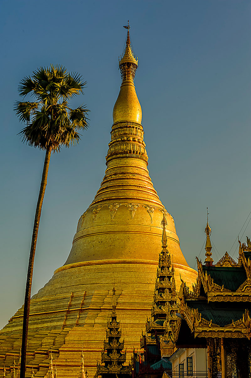 Golden stupa of Shwedagon Pagoda with a palm tree