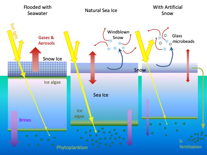 Sea ice restoration approaches like seawater flooding and artificial snow would affect numerous interacting systems.