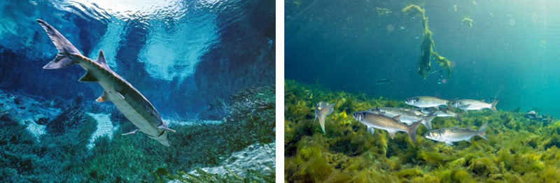 Underwater photographs from 1989 and 2012 at a large spring in Florida showing changes in water quality