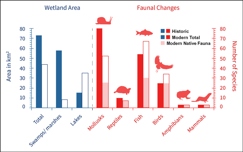 A bar graph showing changes in wetland area, wetland type, and biodiversity in the Cook County region of Illinois from circa 1900 to present day