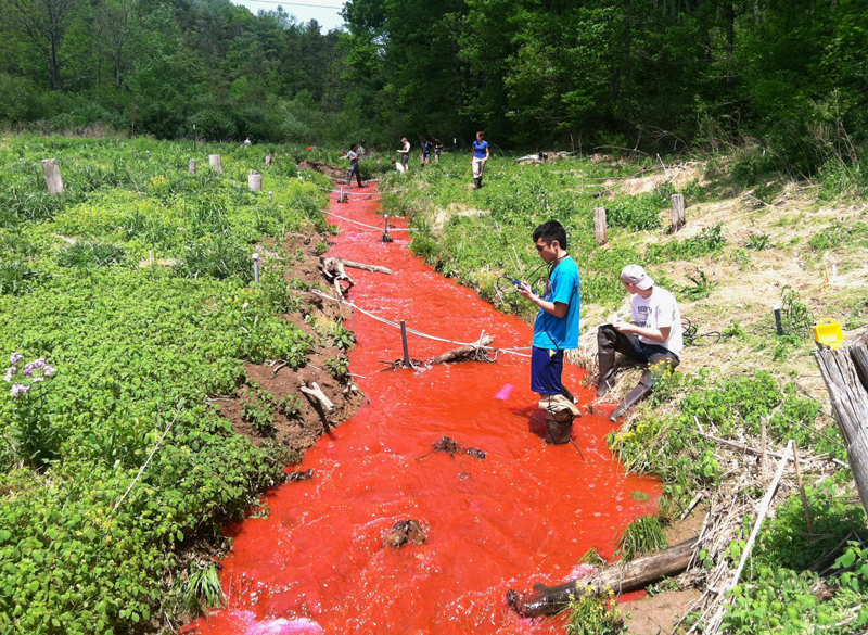Students stand in a river colored red as they perform a dye test near Shale Hills Critical Zone Observatory in Pennsylvania.